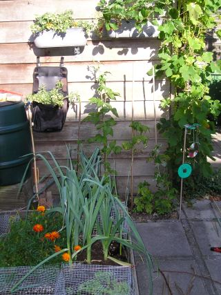 Groente kweken in de vierkante meter moestuin