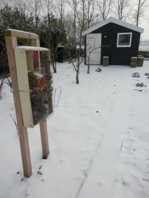 Moestuin in de sneeuw.