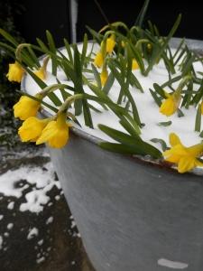 Winter sneeuw voorjaarsbloemen