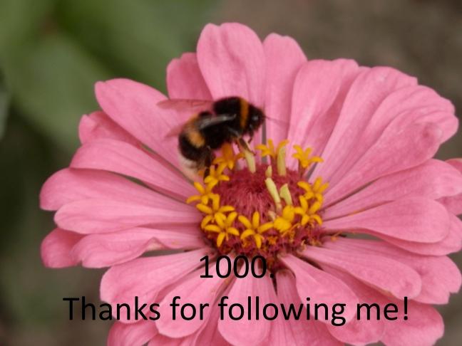 1000 volgers foto Instagram