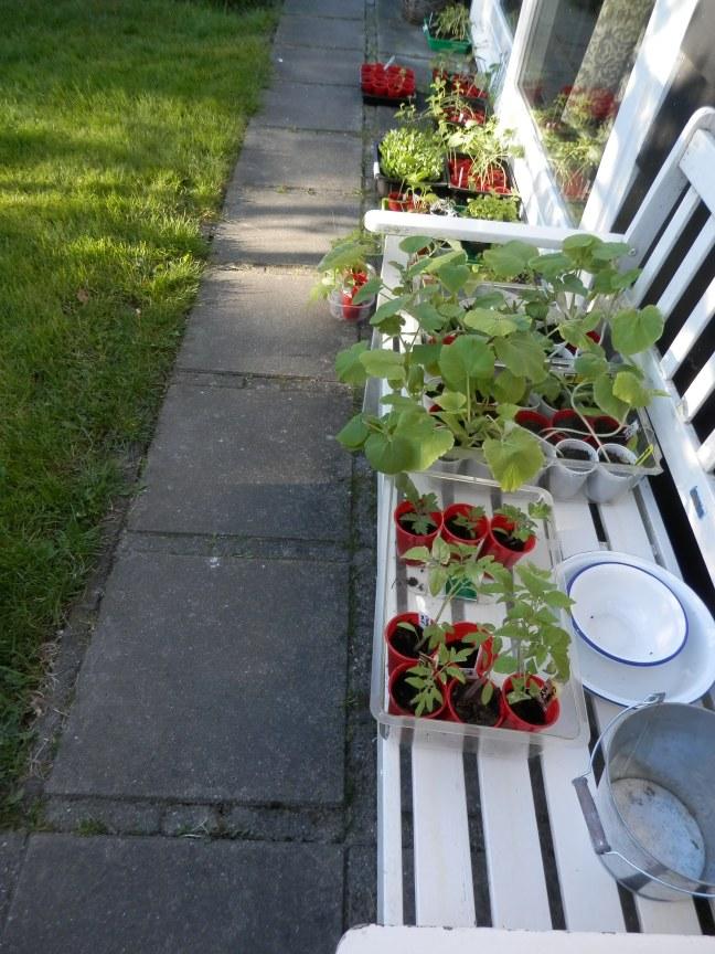 Planten afharden