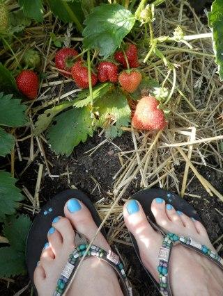 Aardbeien. Zomerse rijkdom aan mijn voeten.