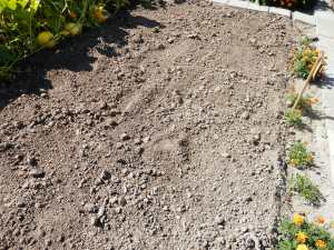 Aardappelveld na de oogst. De grond gelijk maken is belangrijk te voorkoming van slakken.