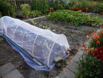 Kolen plant je onder een net tegen vlinders/ rupsen