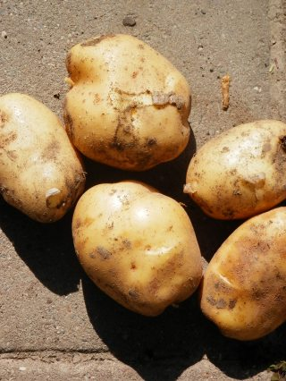 Aardappels Columba