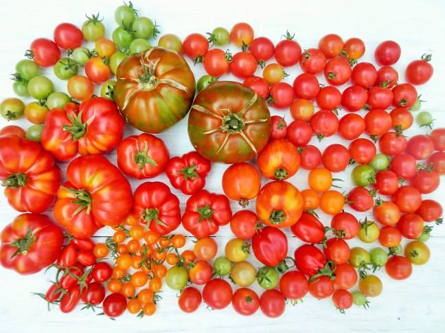 Verschillende tomatenrassen