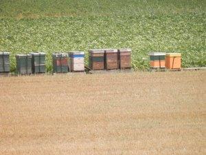 Bijenkassen Biesbosch