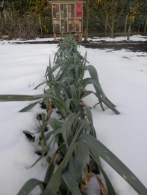 Moestuin winter