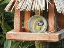 Pimpelmees. Vogels voeren in de winter