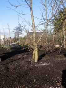 Kalkgift fruitbomen