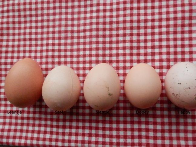 Iedere kip legt verschillende maat ei