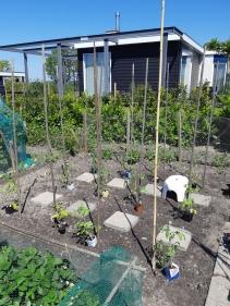 Tomaten planten tips