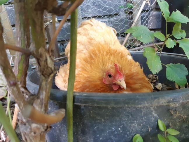 Kip ei leggen op vreemde plek