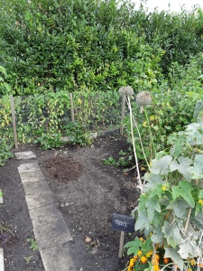 Tuinieren in platte bak