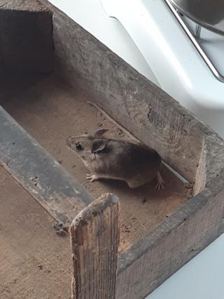 Muizen in de moestuin