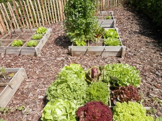 Tuinieren met een beperking