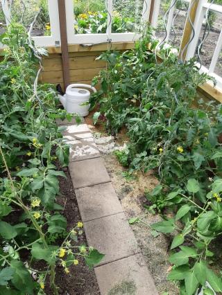 Tomatenblad verwijderen