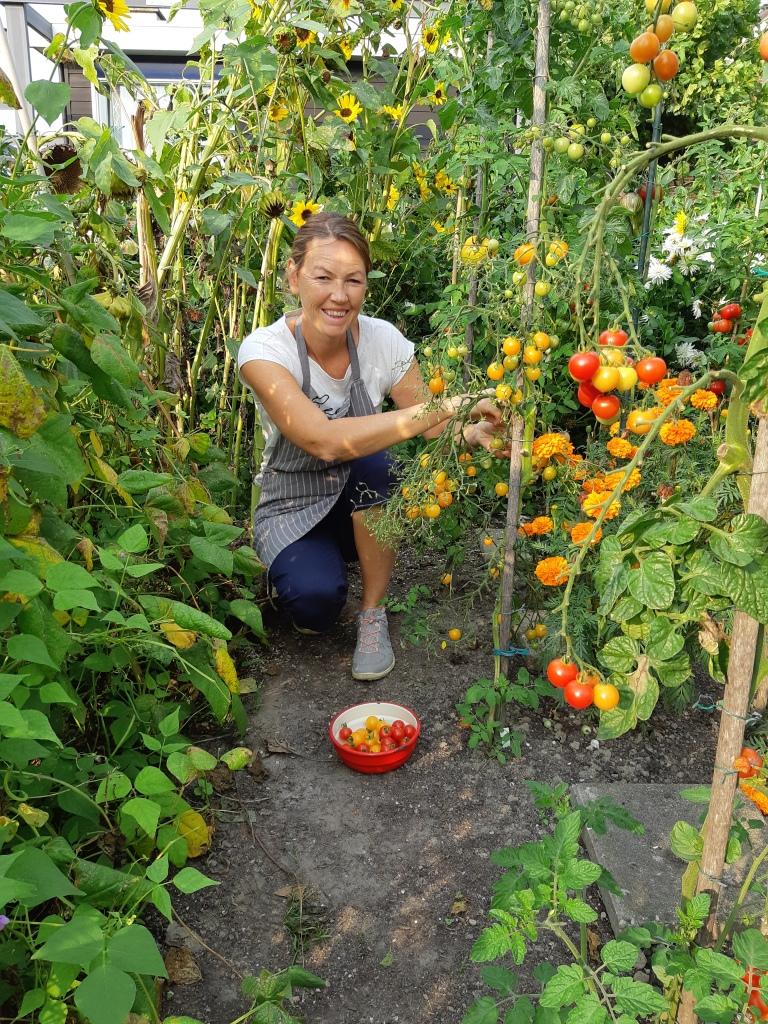 Buitenteelt tomaten