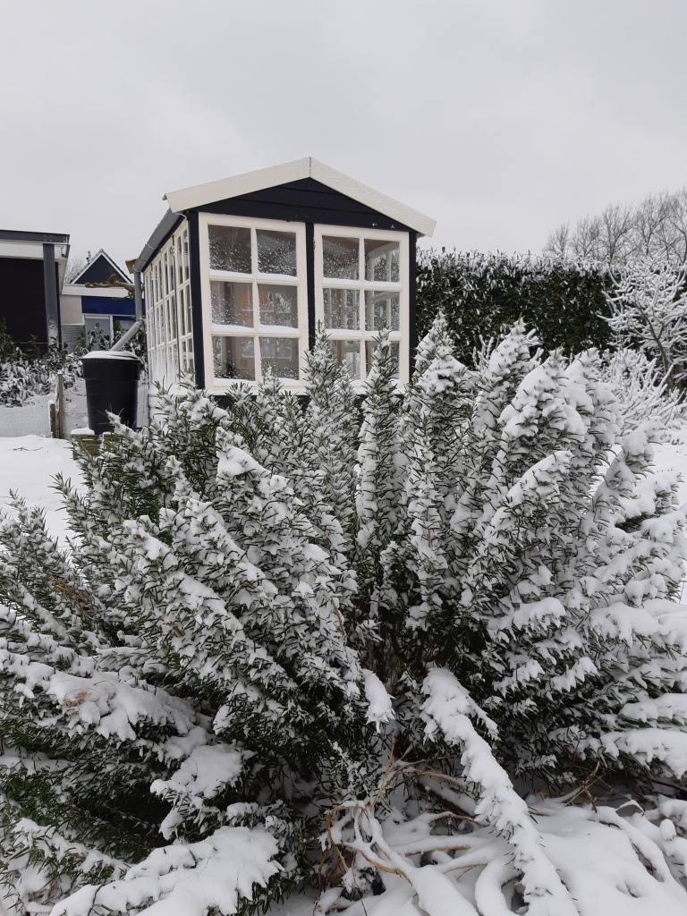 Moestuin en sneeuw