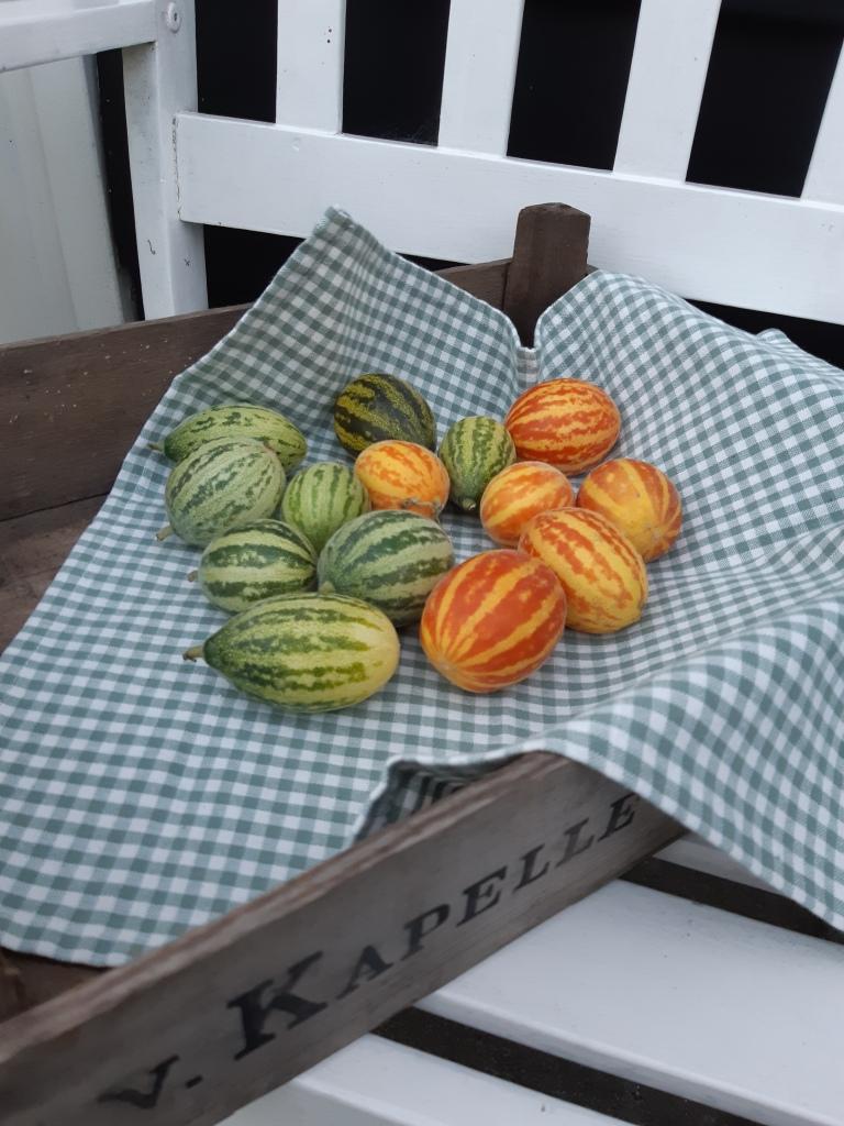 Meloen Rich Sweetness poezenmeloen